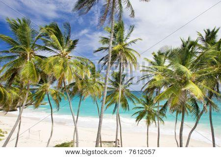 Bahía de fondo Caribe