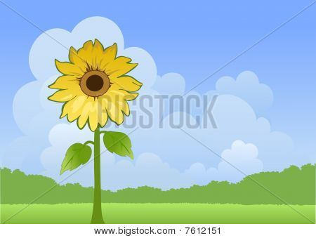 Sunny landscape with sunflower