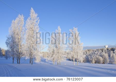 Grove of trees on a snowy meadow.