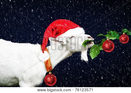 White New Year Goat In Red Santa  Hat
