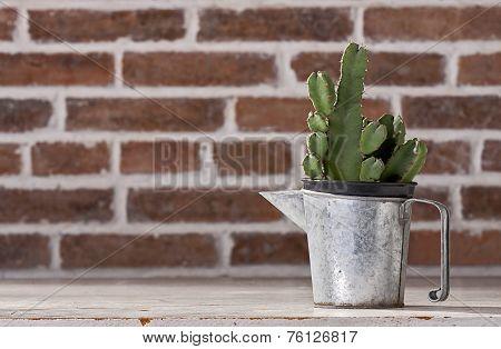 Cactus In Vintage Zinc Pitchers