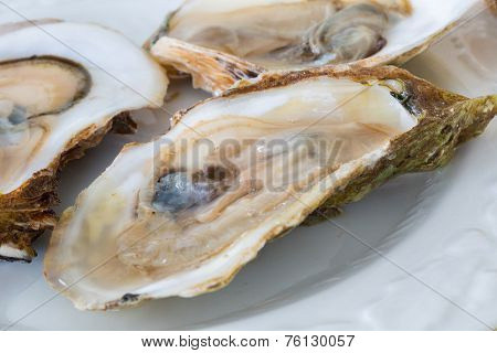 Raw oysters on the half shell.