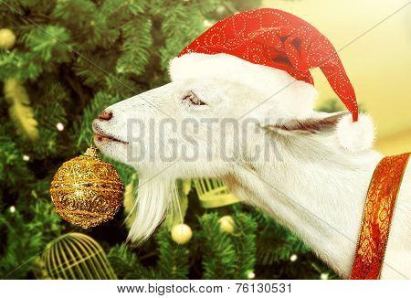 White Goat Decorates Christmas Tree