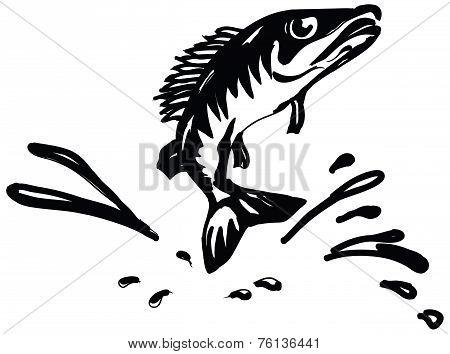 Fish Ruff