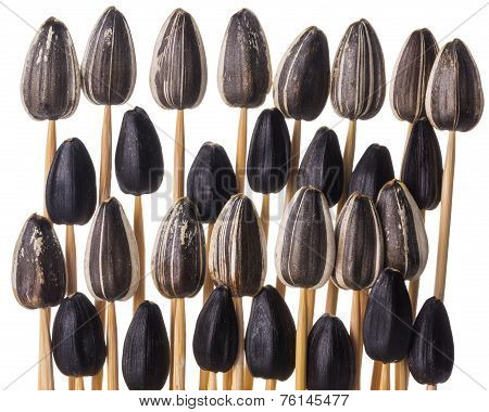 Sunflower Seeds Impaled On Toothpicks