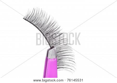 False Lashes And Pink Pincers