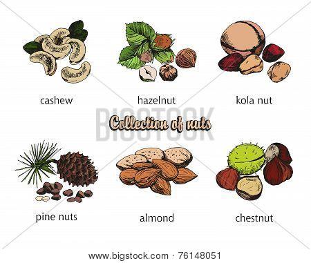 six kinds of nuts