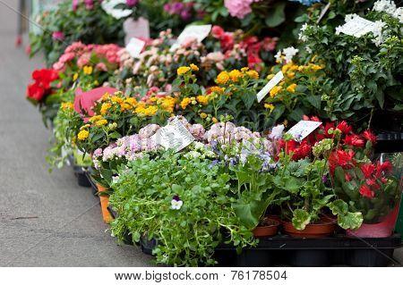 Street show-window of flower shop in Milano