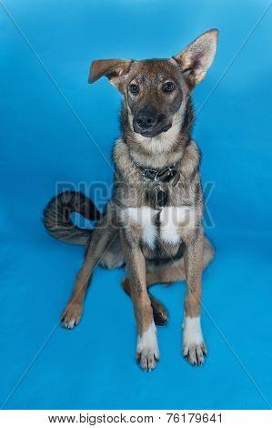 Grey Dog Collar Sitting On Blue