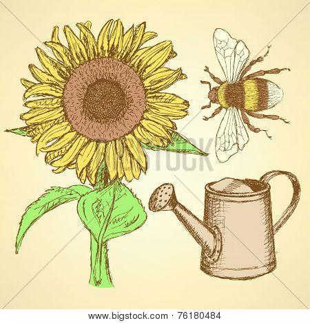 Sketch Sunflower, Bee And Watering Can