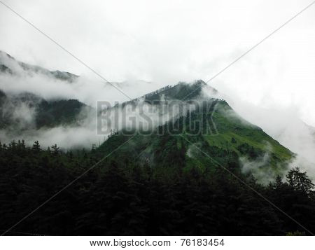 Foggy Pine Forest On Green Himalayas