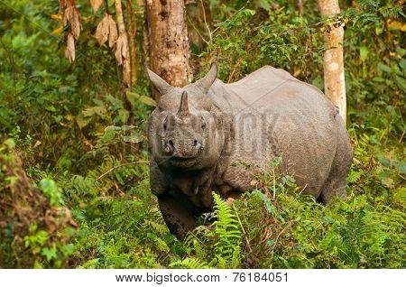 Rhino Inside Forest