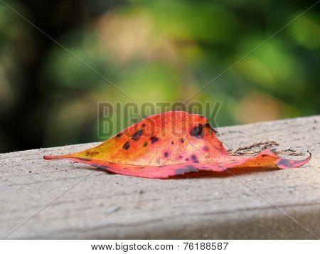 One Fallen Autumn Leaf