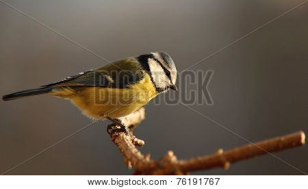 yellow bird perched on a branch