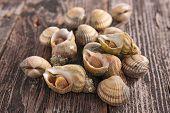 foto of whelk  - clam and whelk - JPG