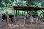 foto of horses ass  - two enclosed donkeys from nicaraguan rustic farm - JPG