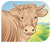 foto of moo-cow  - Cow in a landscape - JPG