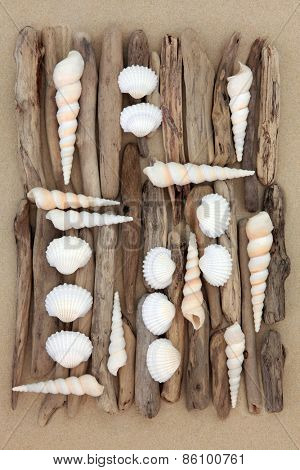 Shell and driftwood abstract collage on beach sand background.