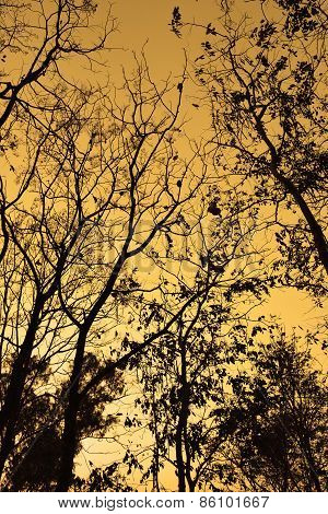 Branches of trees silhouette backlight orange sunset sky in the fall