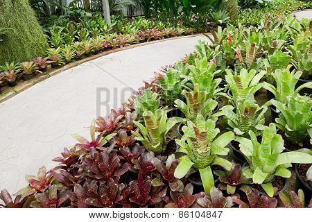 Garden Pathway And Bromeliad.