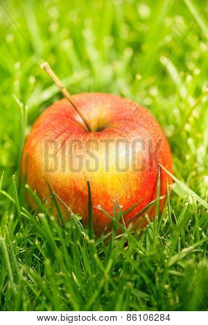 Fresh Apples Laying On Green Grass