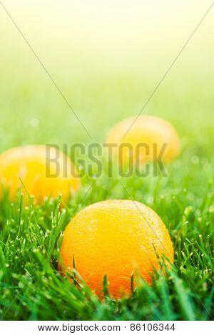 Fresh Oranges Laying On Green Grass
