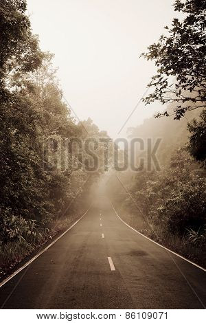Road Through The Forest - Road With Smog