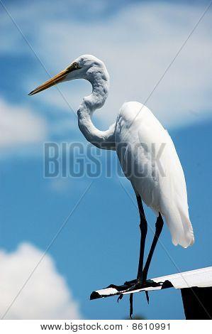 Egret Resting on a Roof 1