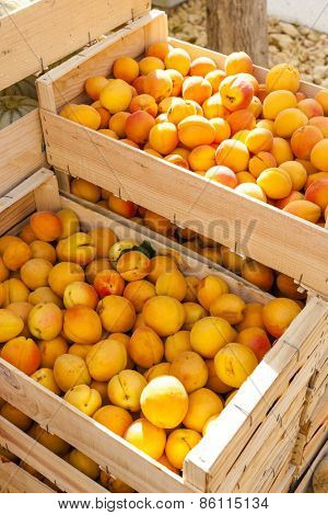 apricots, market in Nyons, Rhone-Alpes, France