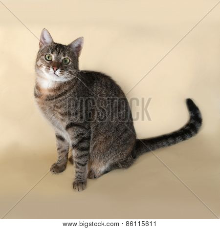 Tabby Cat Sitting On Yellow