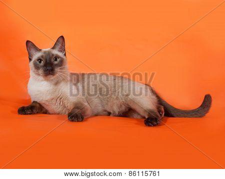 Thai Cat With Green Eyes Lying On Orange