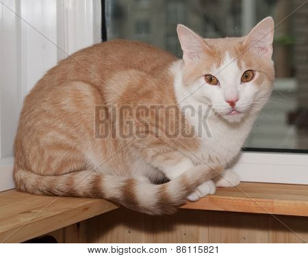 Red And White Cat Sitting On Windowsill