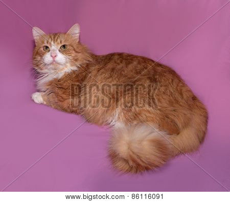 Red And White Cat Lying On Pink