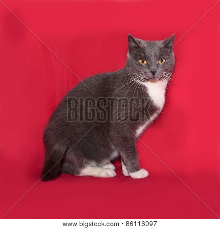 Gray And White Cat Sitting On Red