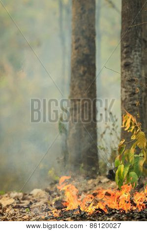 Fire Burning In A Forest