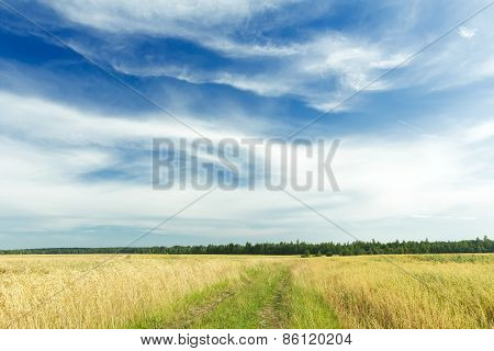 Cirrus clouds on azure sky above rye field and dirt road