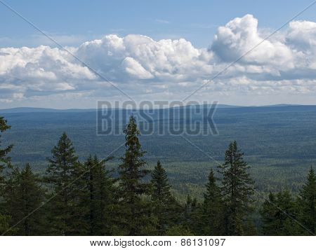 View of the taiga from the mountain top