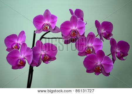 Beautiful Bloom Of Red Fresh Orchid Flower