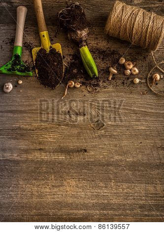 Plants for planting and garden accessories on a wooden table vintage