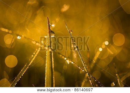 Dew Droplets On Morning Grass. Photo With Bokeh Effect On Background