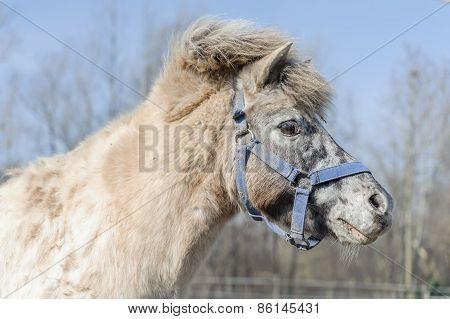 Portrait Of Horse Pony
