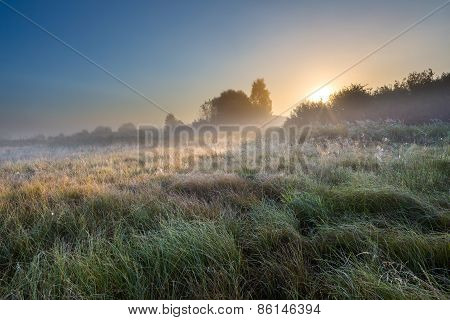 Foggy Morning On Polish Meadow