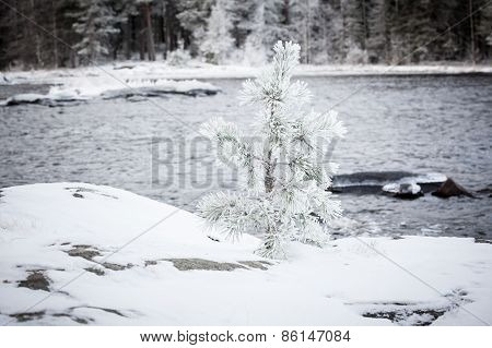 Small tree covered in snow