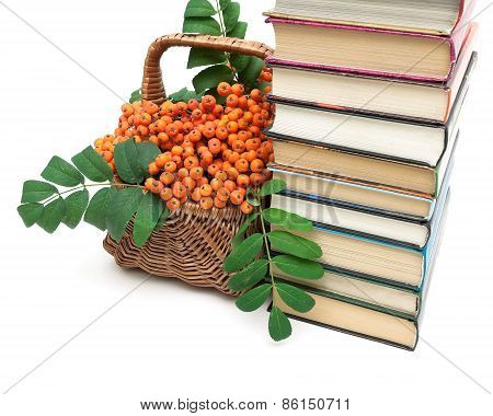Bunches Of Rowan In A Wicker Basket And A Stack Of Books On A White Background