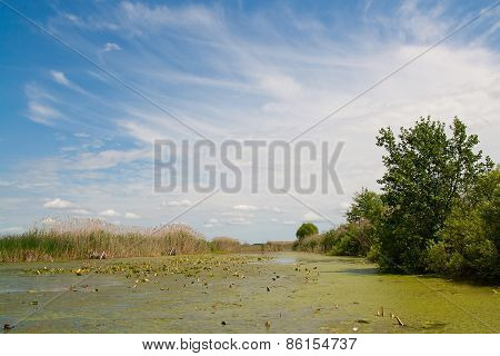River On Background Reed And Sky.