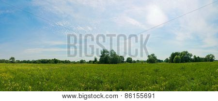 Panoramic View Of The Spring Meadow Full Of Yellow Flowers