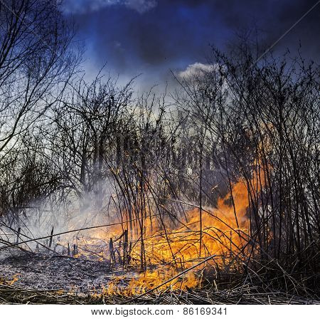 Wildfire Burning In The Field