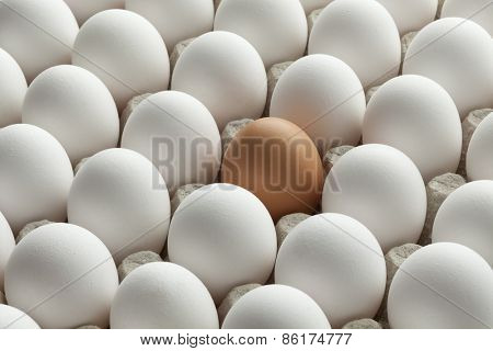 Organic fresh white eggs and one brown in carton crate