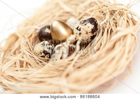 Nest with golden and natural quail eggs, flower shaped, isolated on white