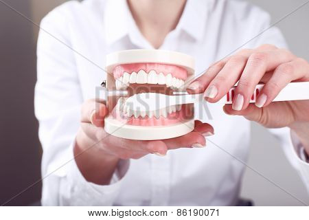 Female hand holding dental model with toothbrush on gray background